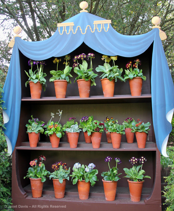RED-002-Auricula-Theatre