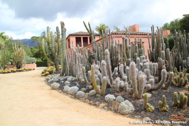 House & Cacti