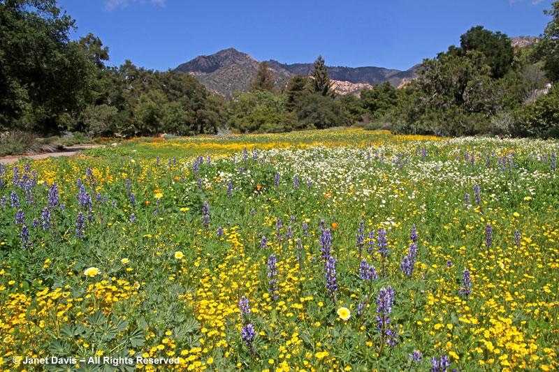 Reinventing A Meadow Janet Davis Explores Colour