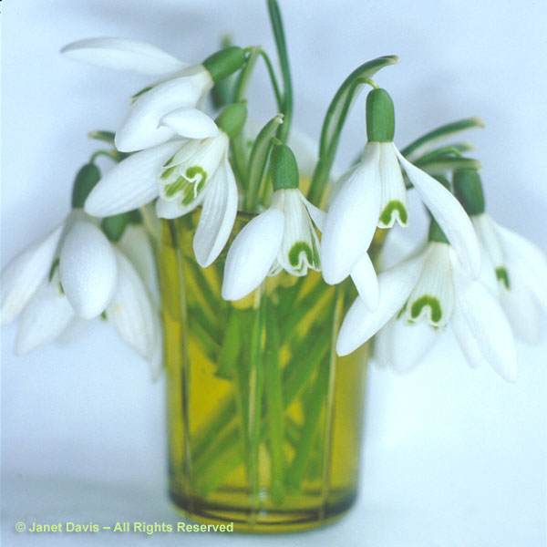 A nosegay of snowdrops in an antique shot glass.  Placed in a little vase like this, you can sniff their sweet perfume.