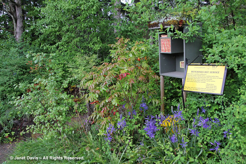 HCP Native Garden & bee box