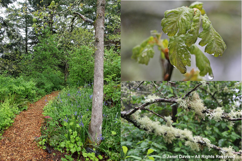 HCP's Garry Oak Woodland