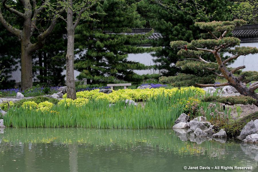Hostas-Chinese Garden-Montreal Botanical Garden