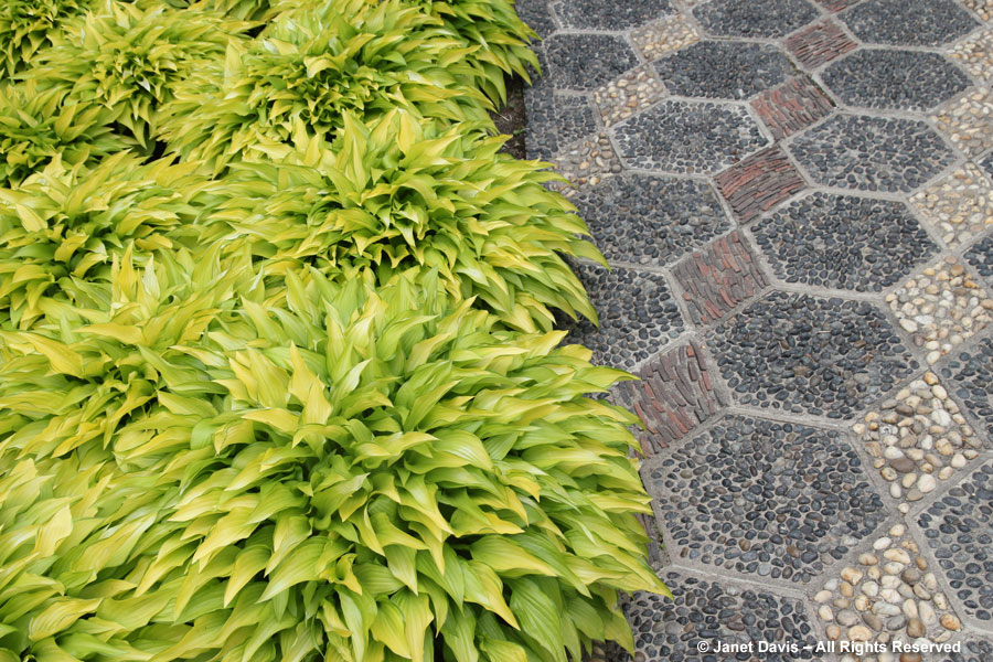 Hostas & pebble-mosaic path