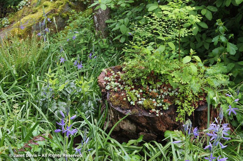 Stump planting