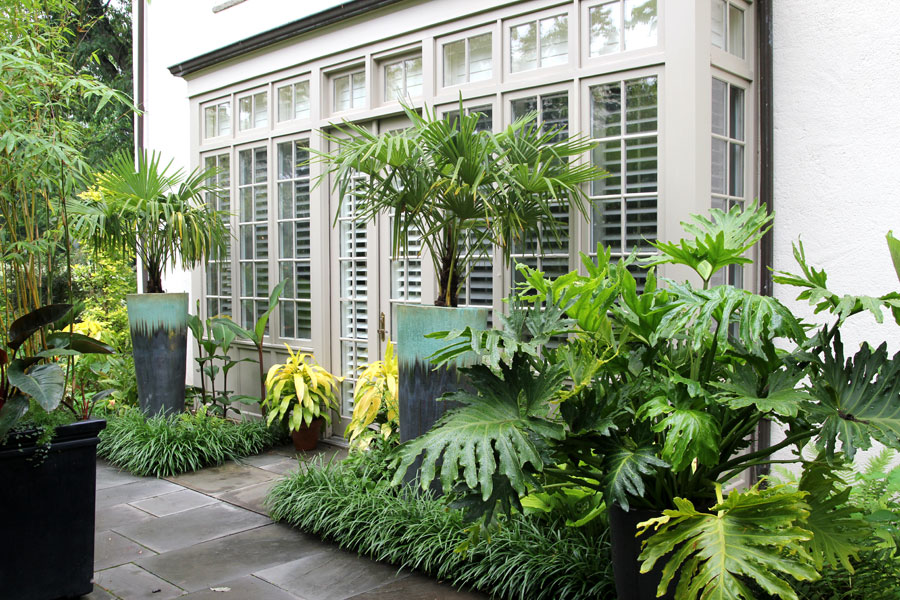 03-Visitor Center Palms