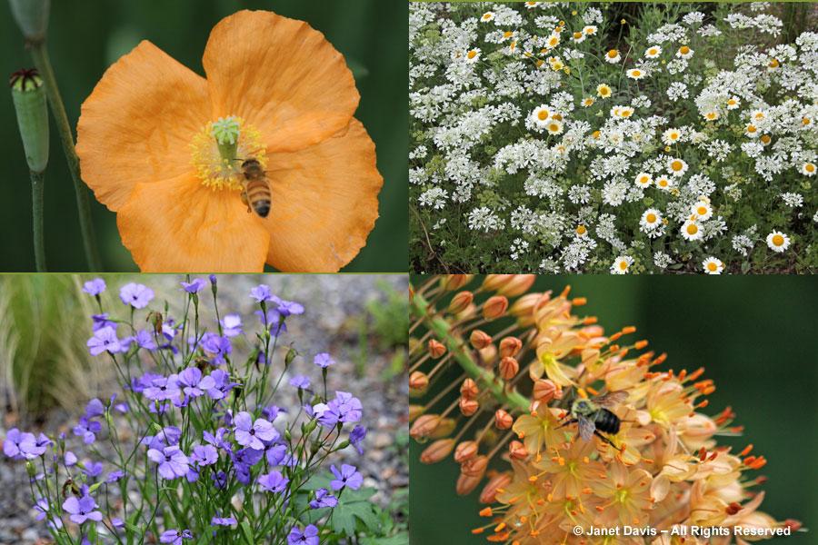05-Gravel Garden Plants