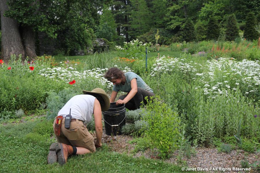 06-Weeding the Gravel