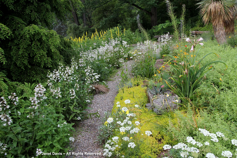 07-Path in Gravel Garden