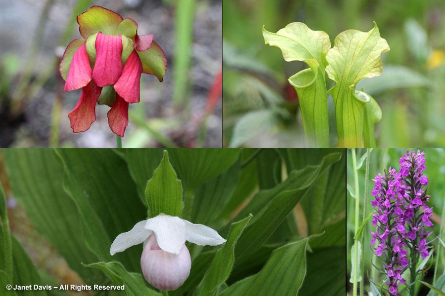 17-Carnivorous Plants & Orchids