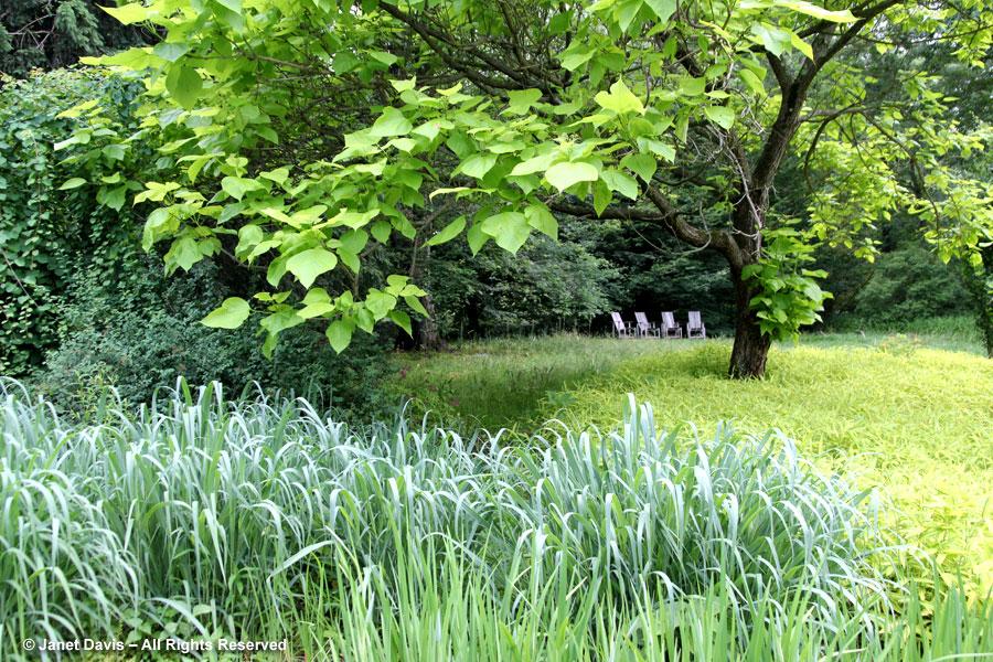 19-Catalpa outside Asian Woods