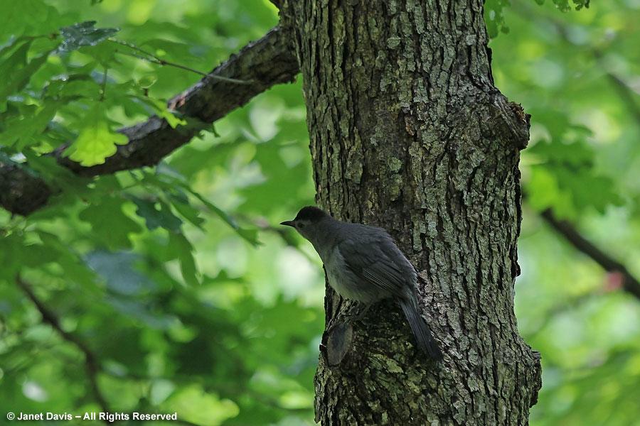 21-Bird in Bell's Run Woods