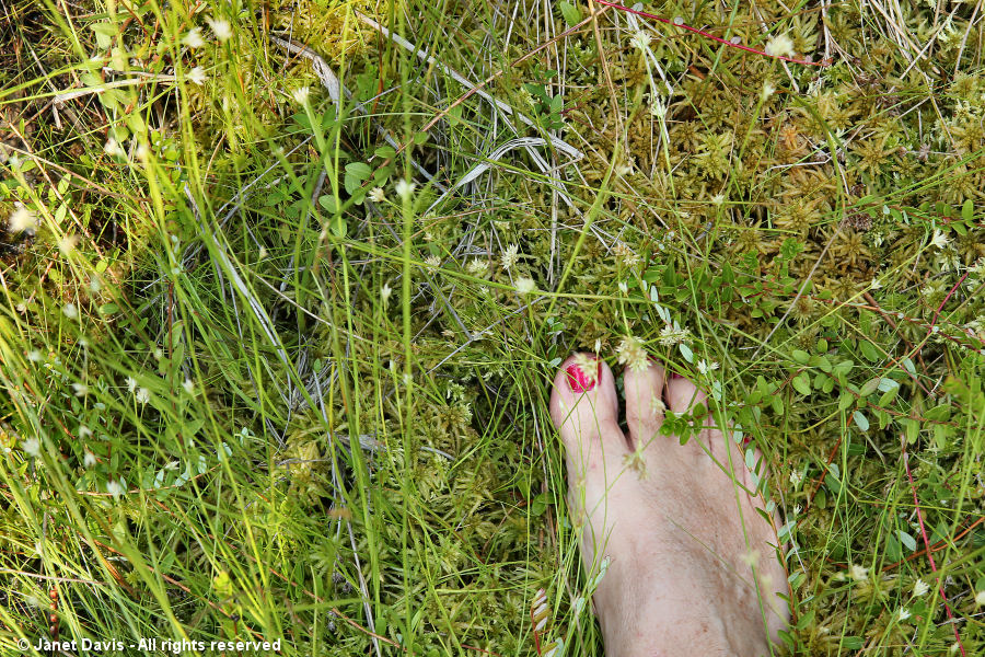 Barefoot in the bog