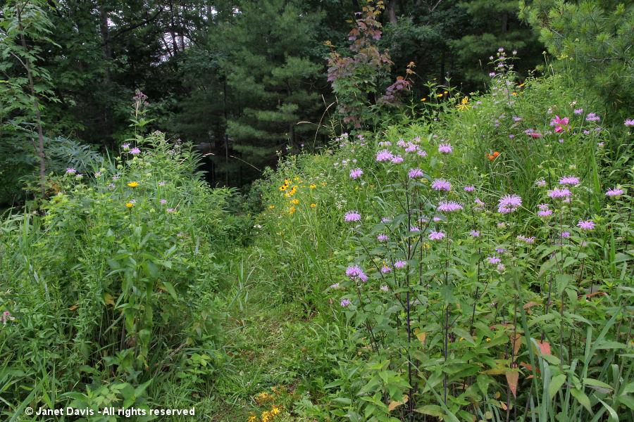 Wide angle meadow shot