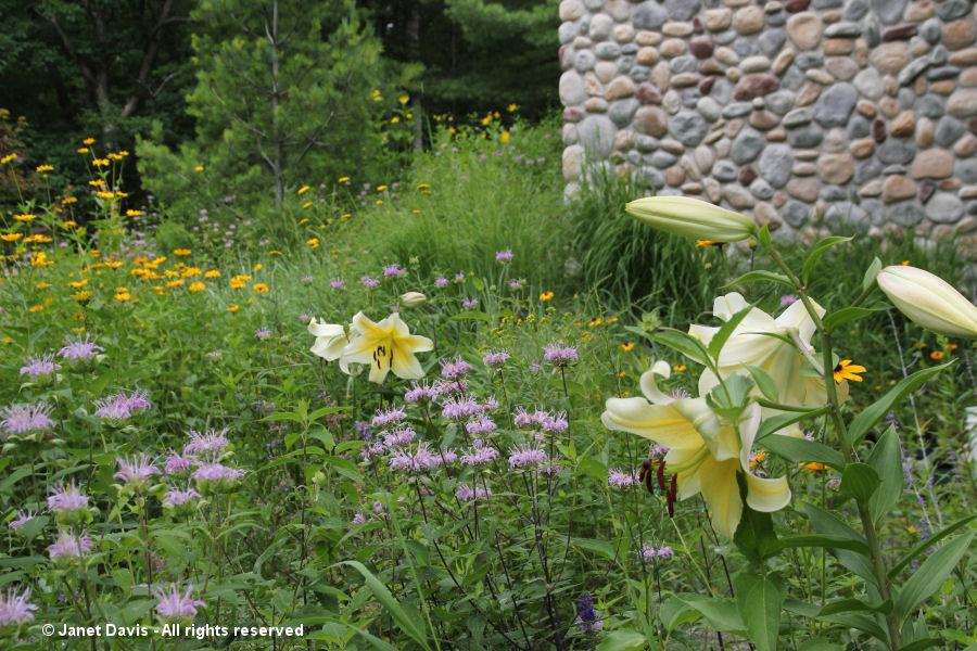 Wild beebalm & 'Concha d'Or' Orienpet lilies