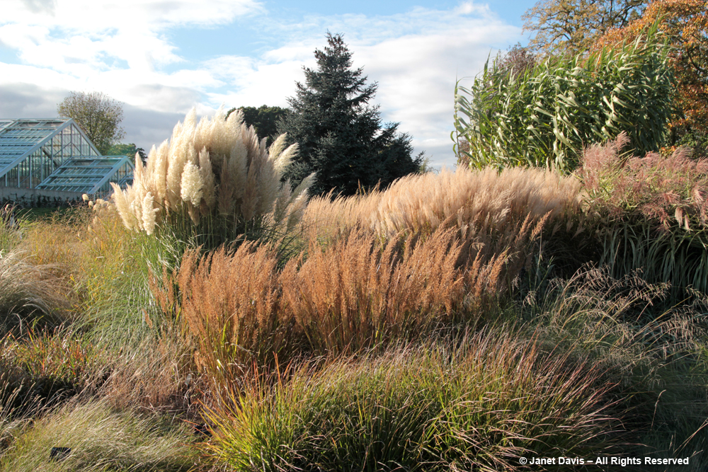 Ornamental grass gardens 100 images great ornamental for Best ornamental grasses for landscaping