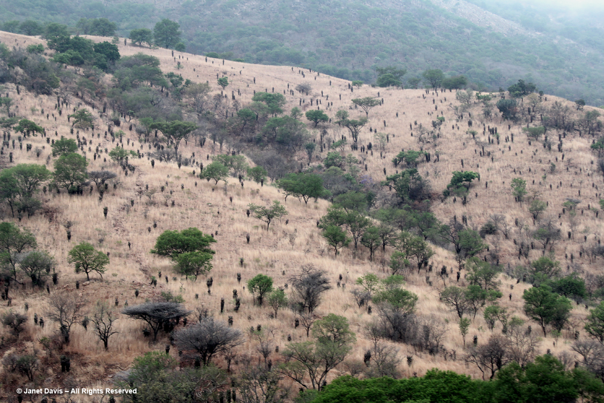 Acacias & Aloe ferox-Mpumalanga