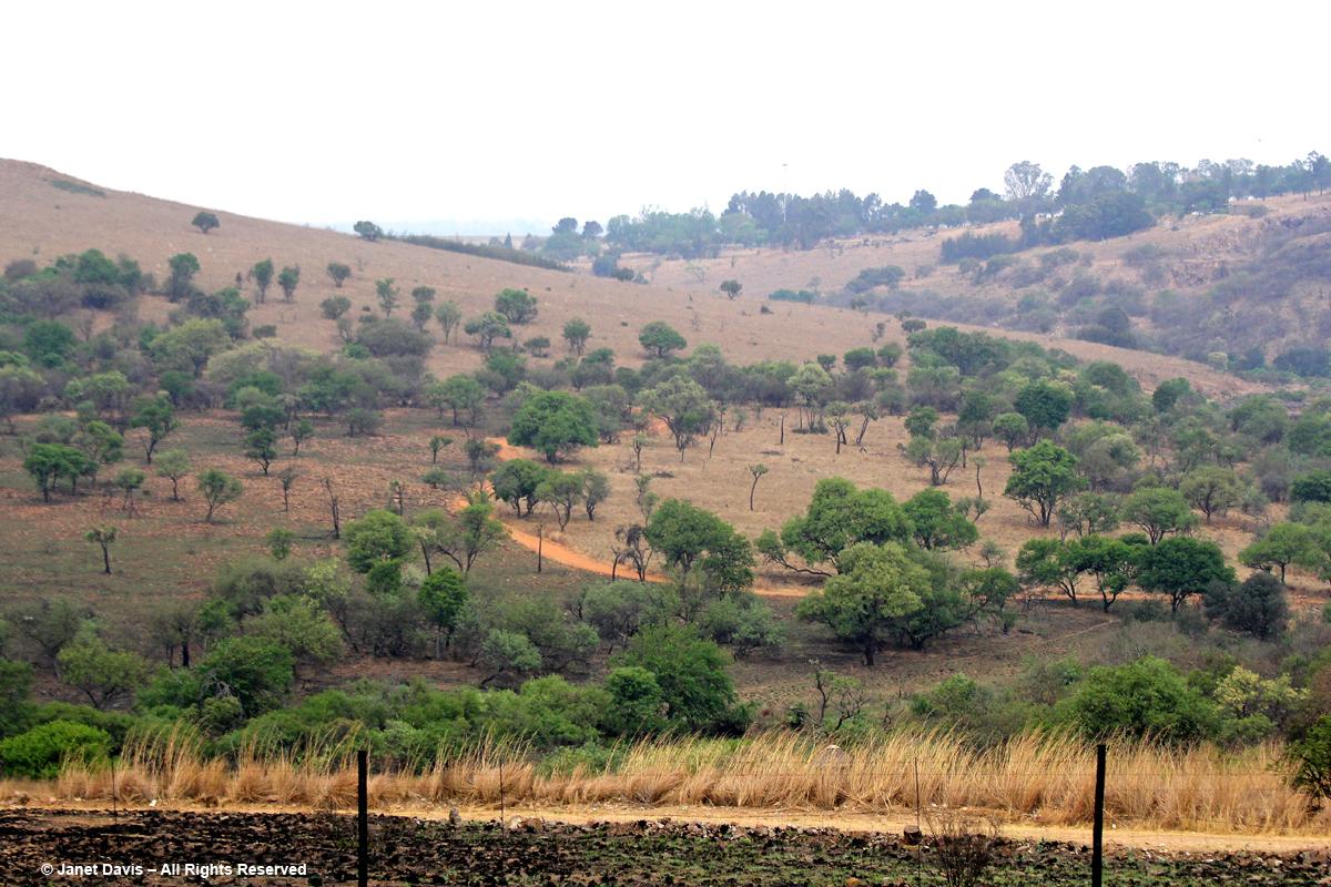 Landscape with acacias