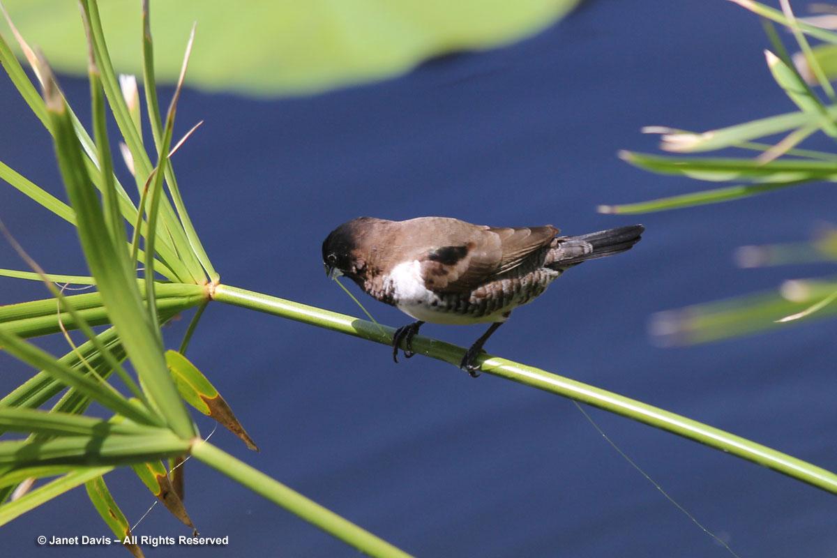 Bird with string algae-Durban Botanic