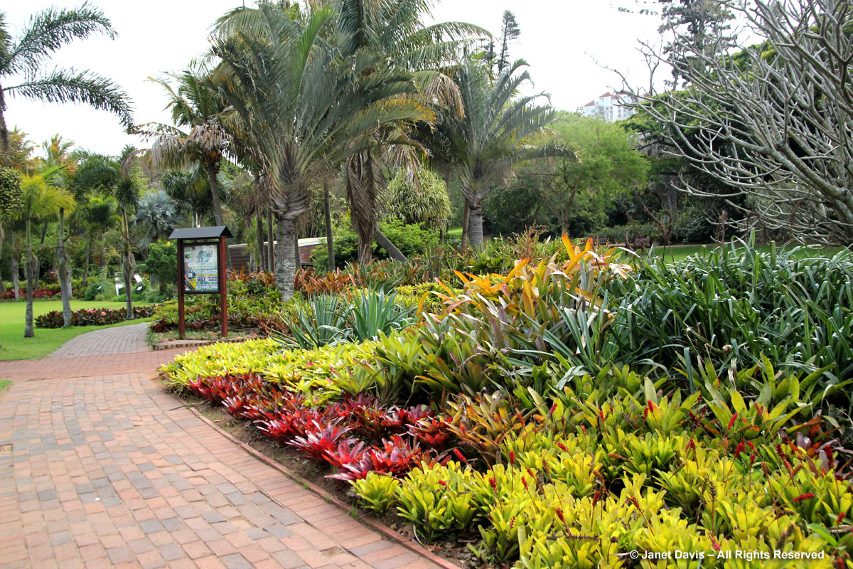 Bromeliads-Durban Botanic