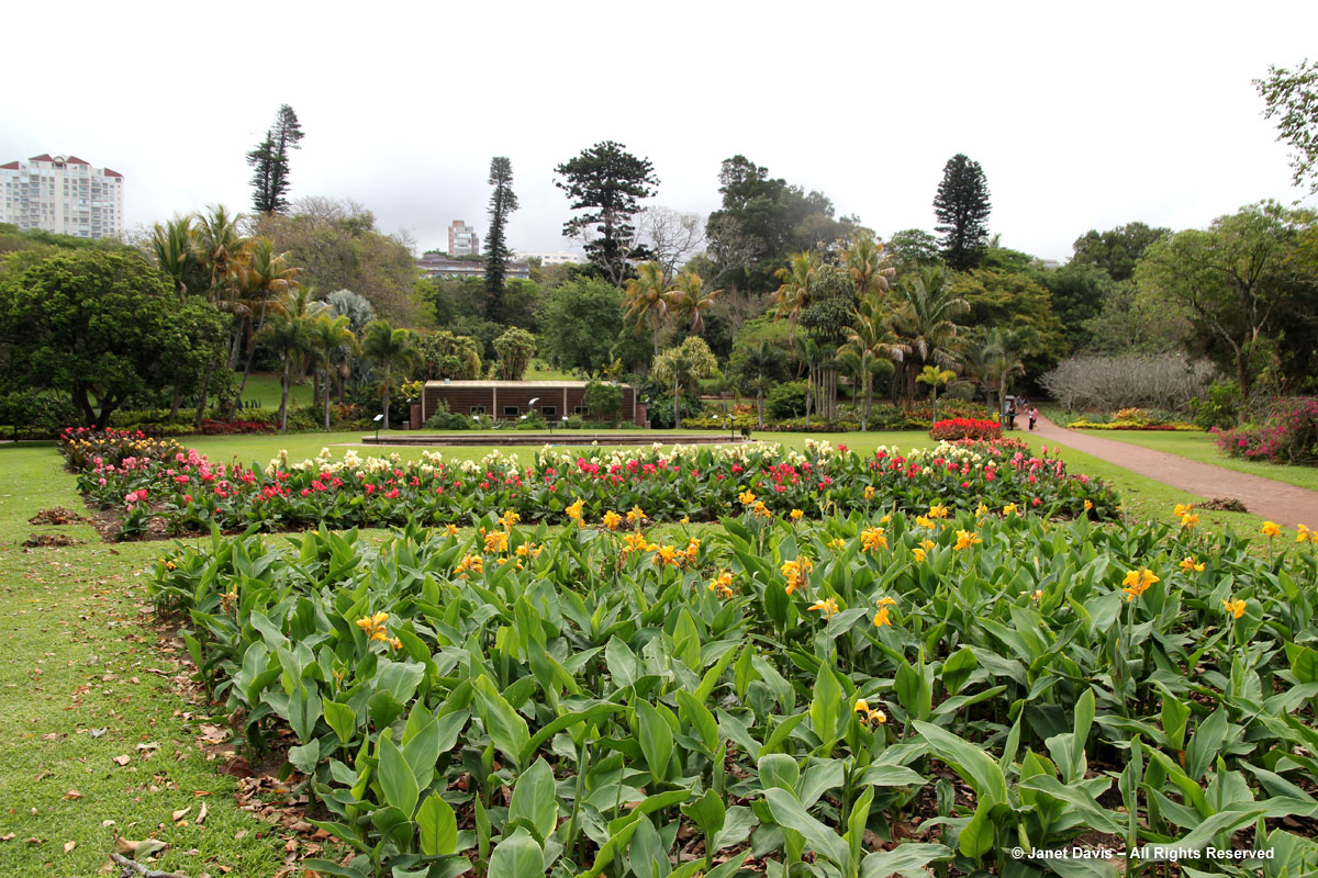 Canna Beds-Durban Botanic
