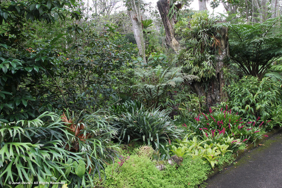Bromeliads & ferns -Makaranga