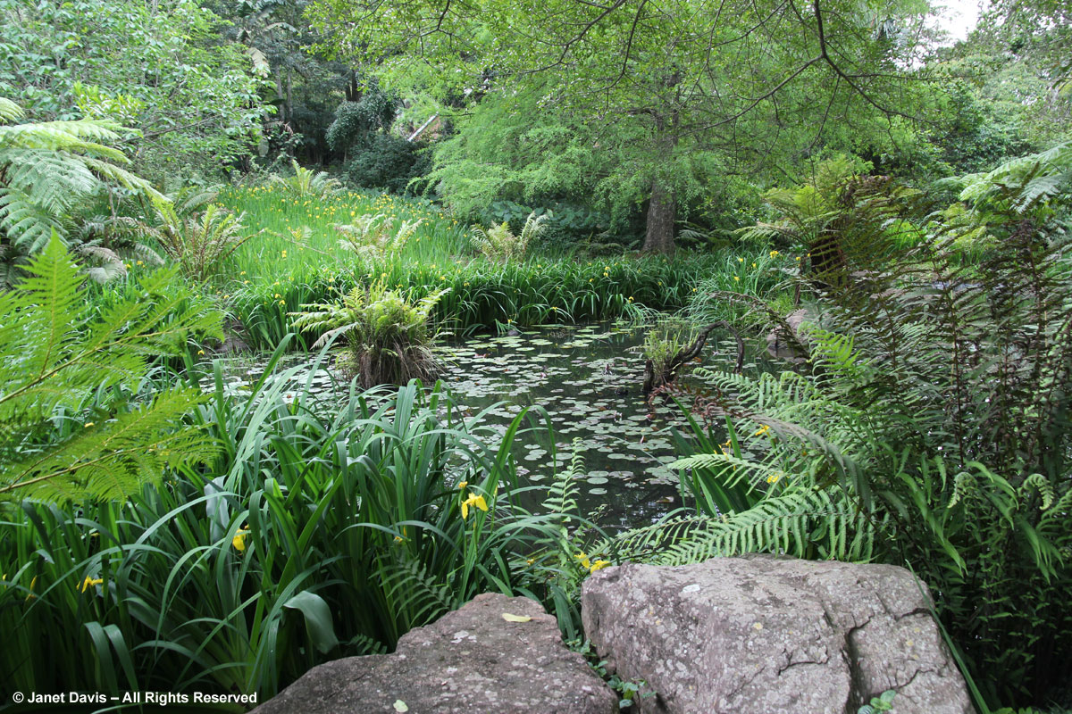 Iris pseudacorus-Makaranga