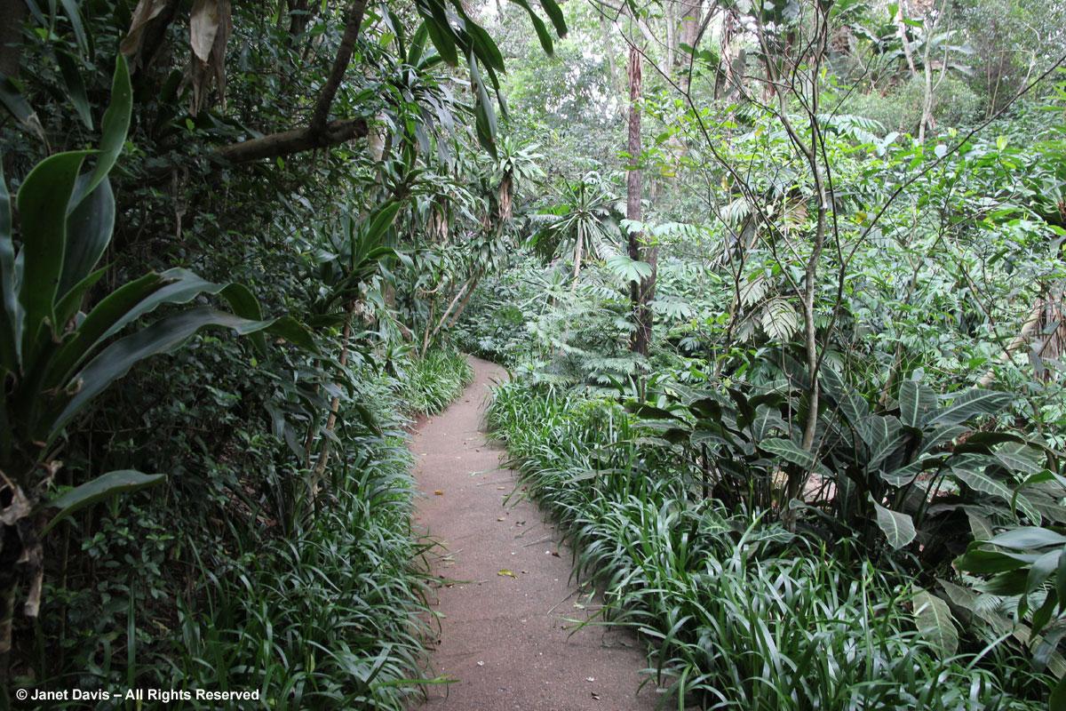 Path to waterfall-Makaranga