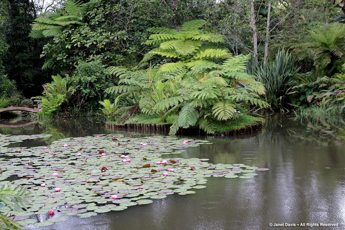 Pond and waterlilies-Makaranga