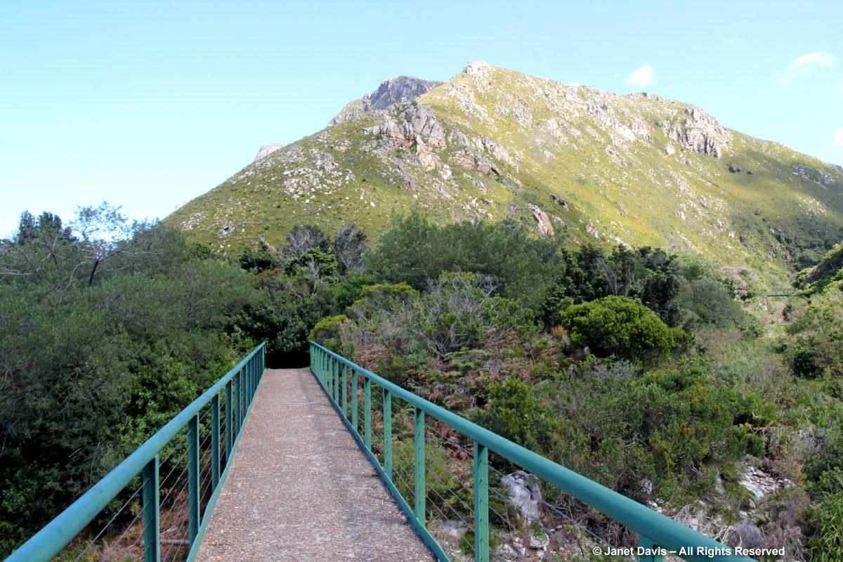 Bridge to Fynbos trail-Harold Porter BG