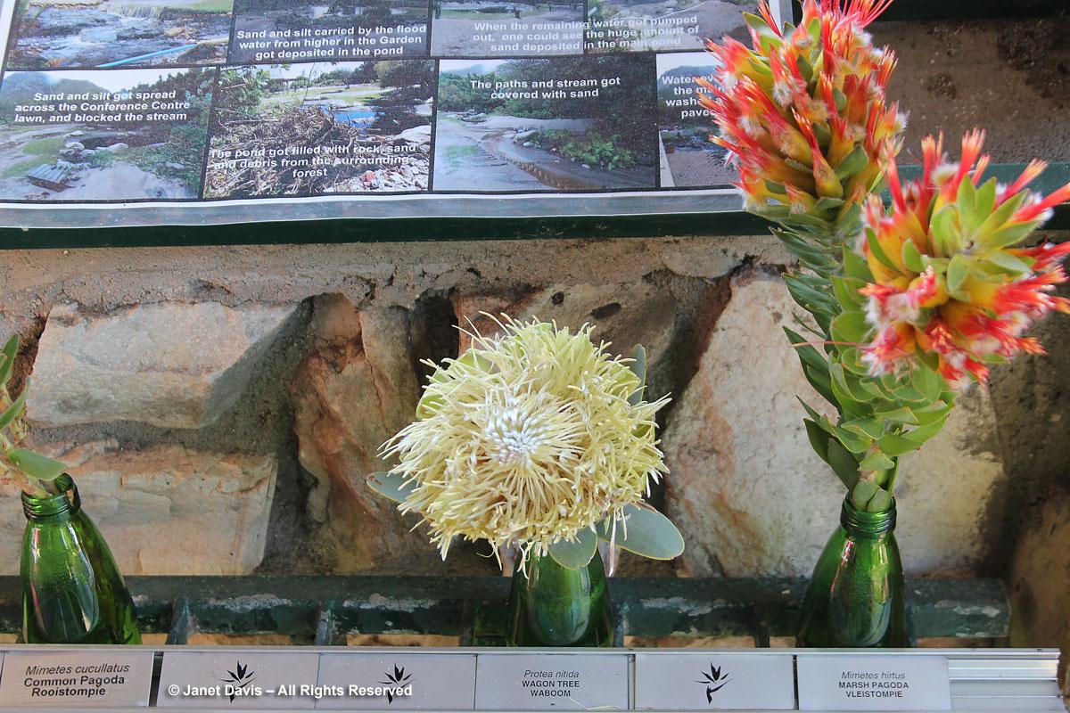 Flood story-Harold Porter Botanical Garden