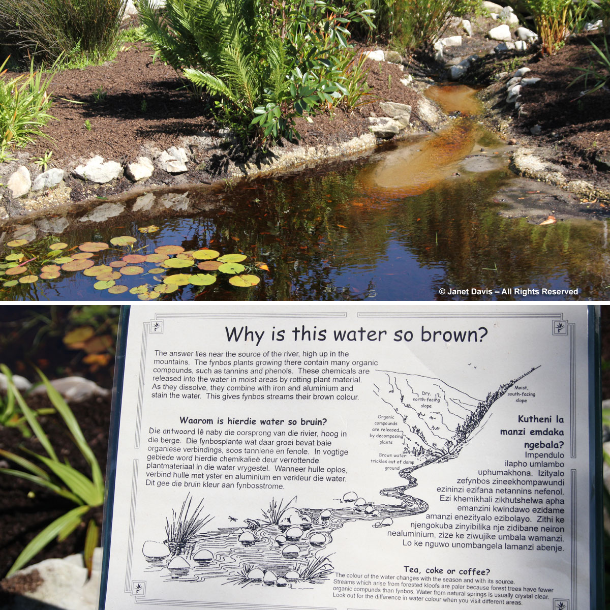 Tannins in water-Harold Porter BG