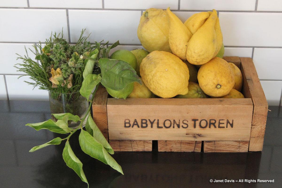 05-Lemons-Babylonstoren