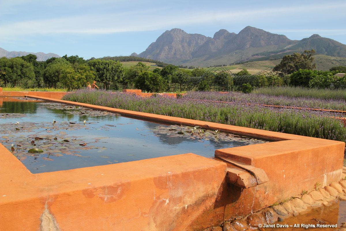 09-Lily pool-Babylonstoren