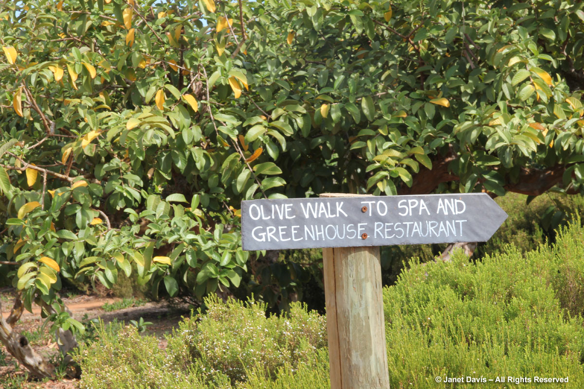 12-Olive-Walk
