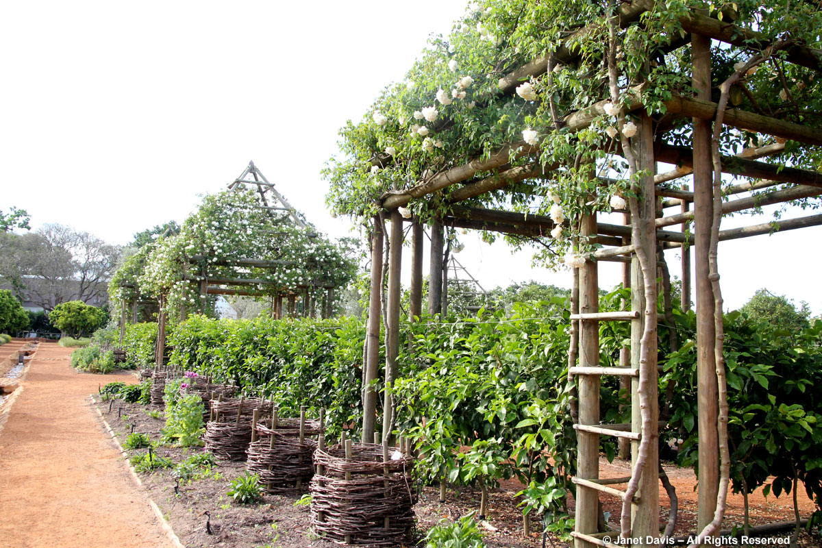 26-Rhubarb baskets & rose arbours