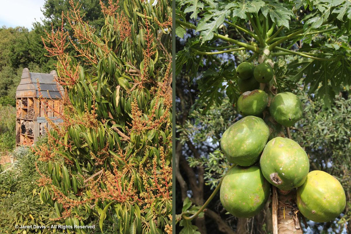 28-Tropical-fruit-Babylonstore