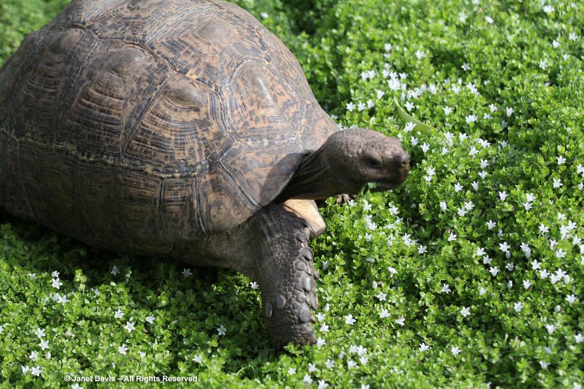 34-Tortoise-Babylonstoren