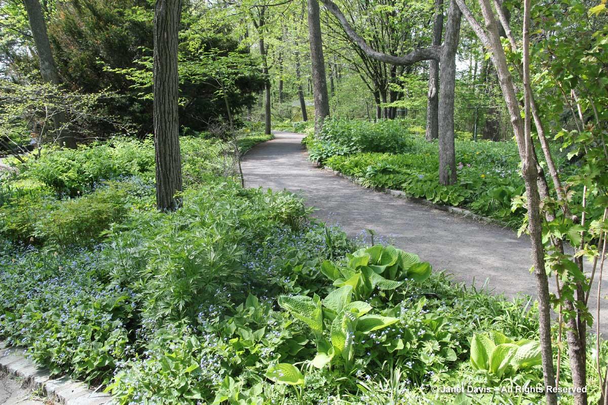 Shade Garden path-Montreal Botanical Garden