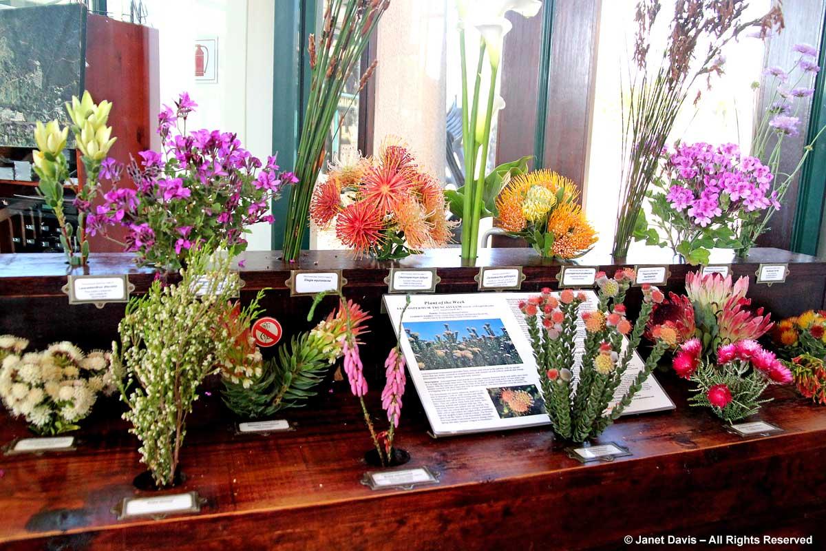 02-What's in Bloom-Kirstenbosch