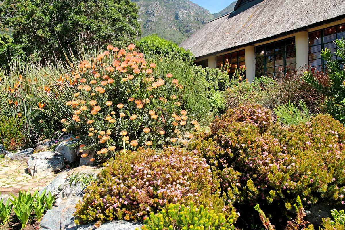 06-Endangered plants-Kirstenbosch