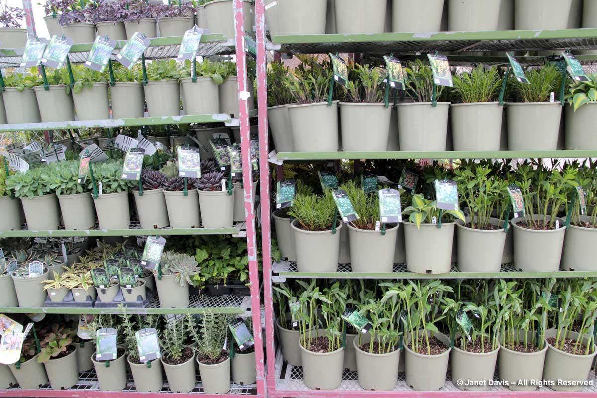 TBG-Plant-Sale