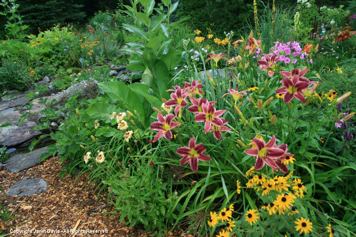 Daylily & rudbeckia