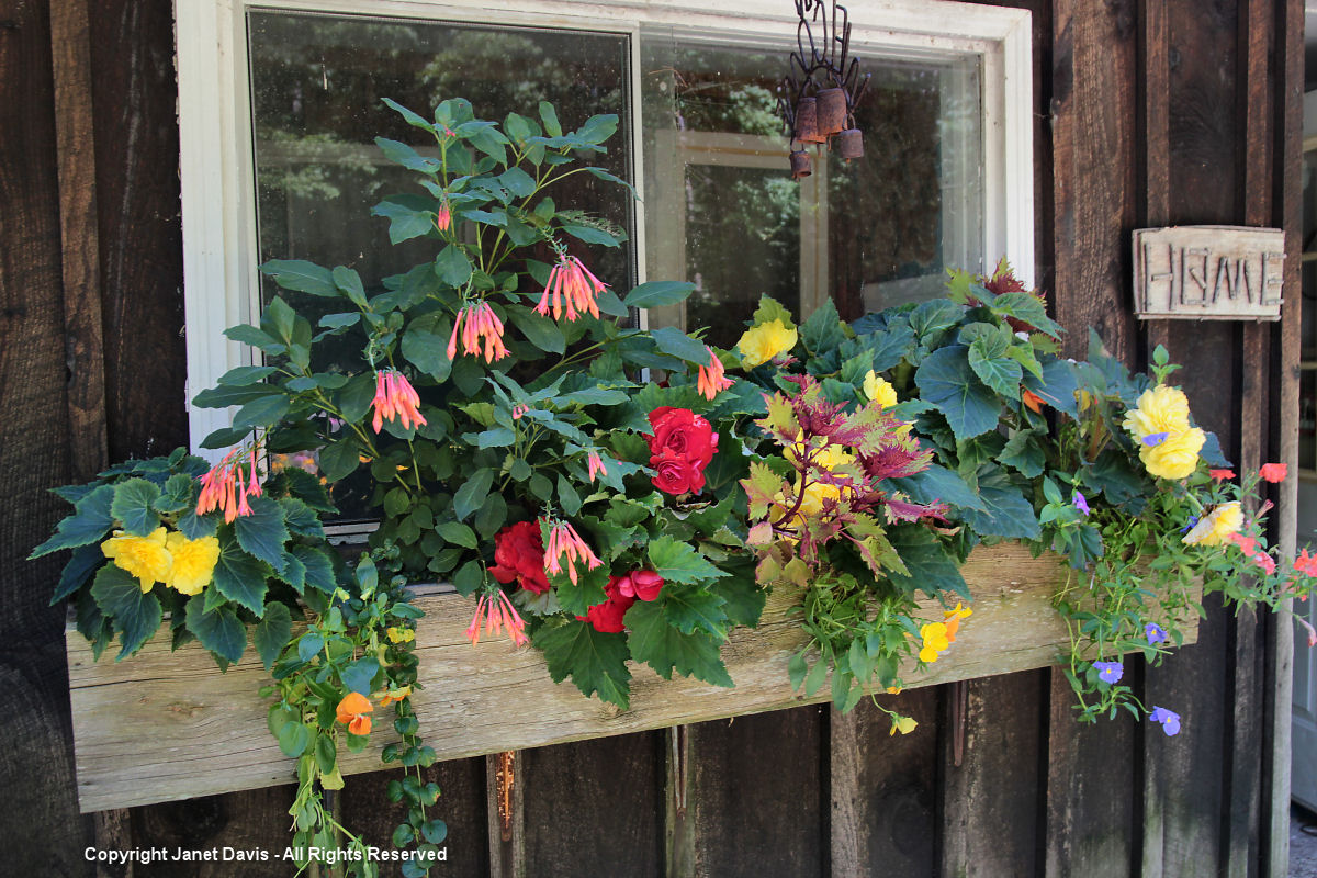 House windowbox