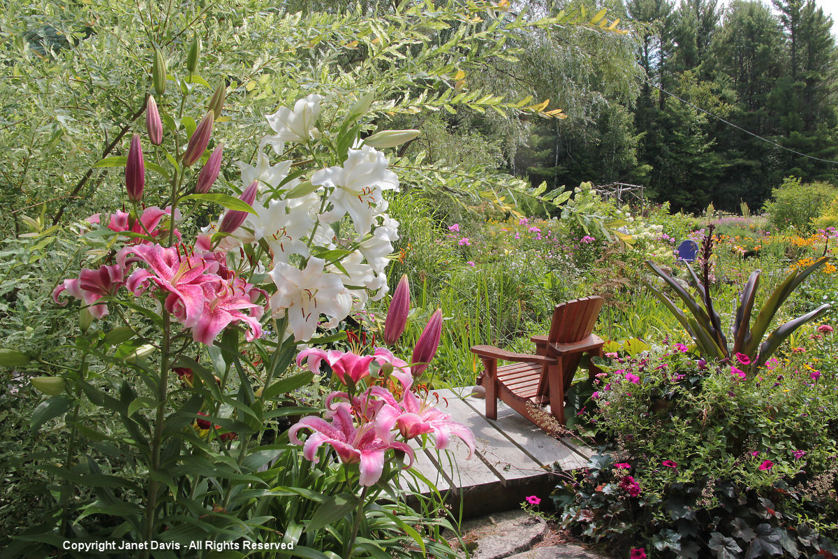 Lilies & dock