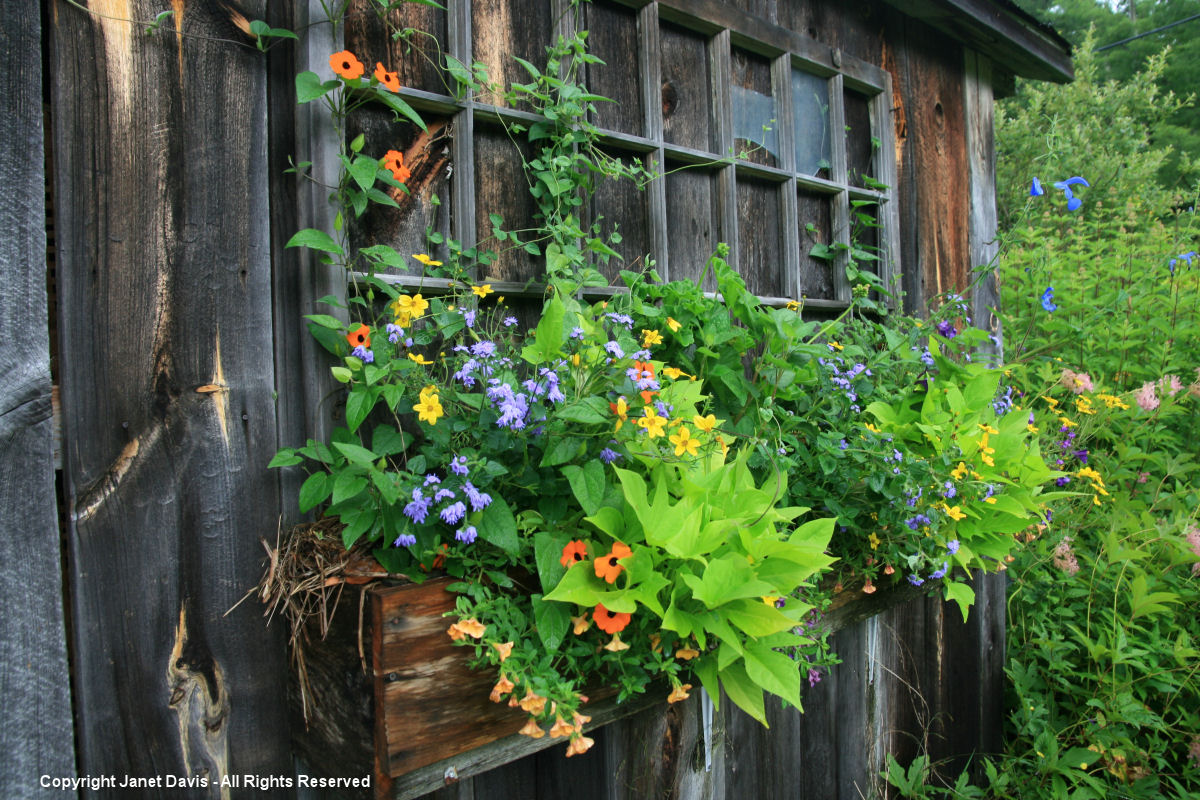 Shed Window Box