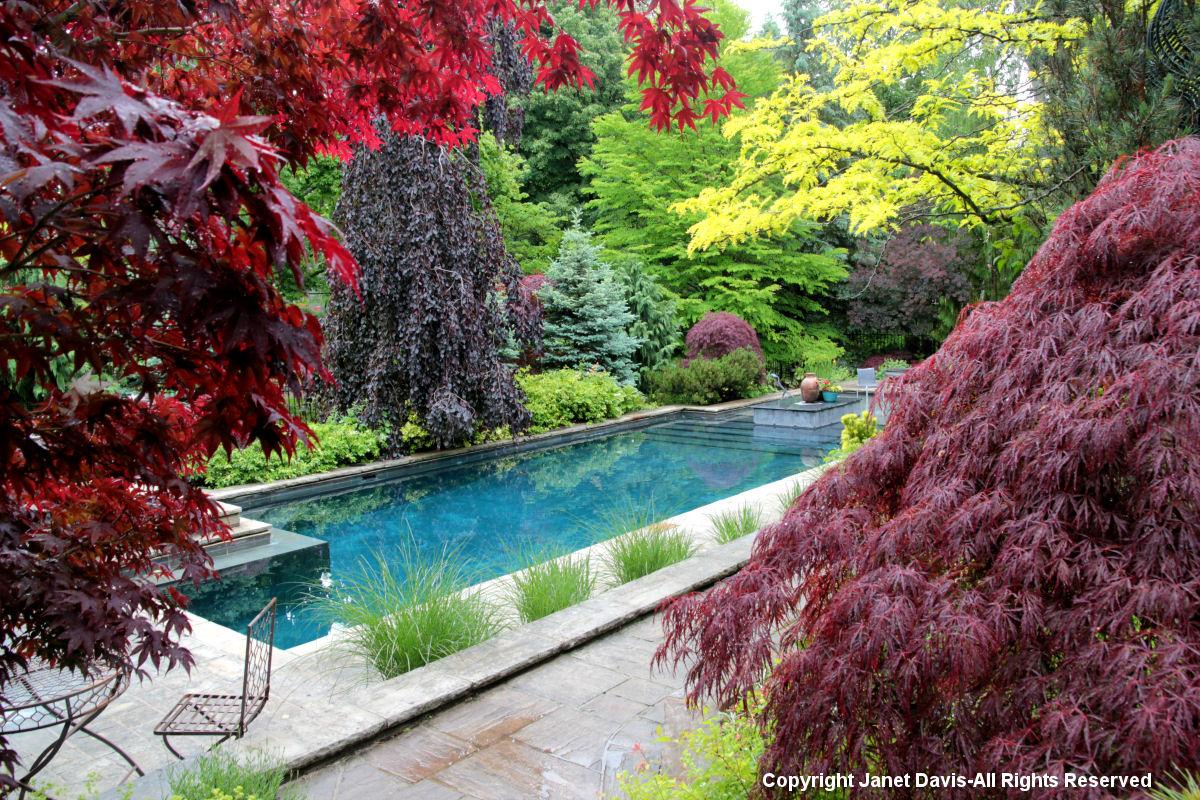 Swimming pool & foliage