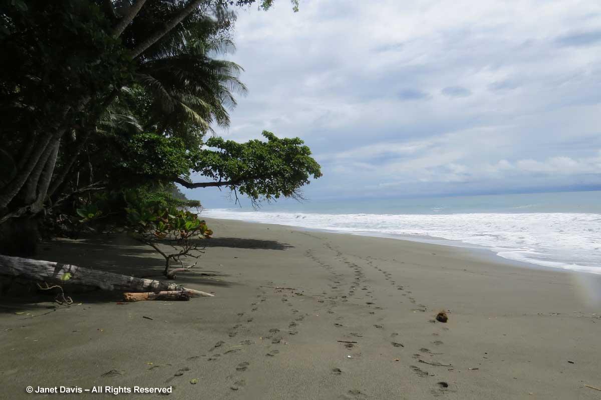 Beach-El Remanso Lodge