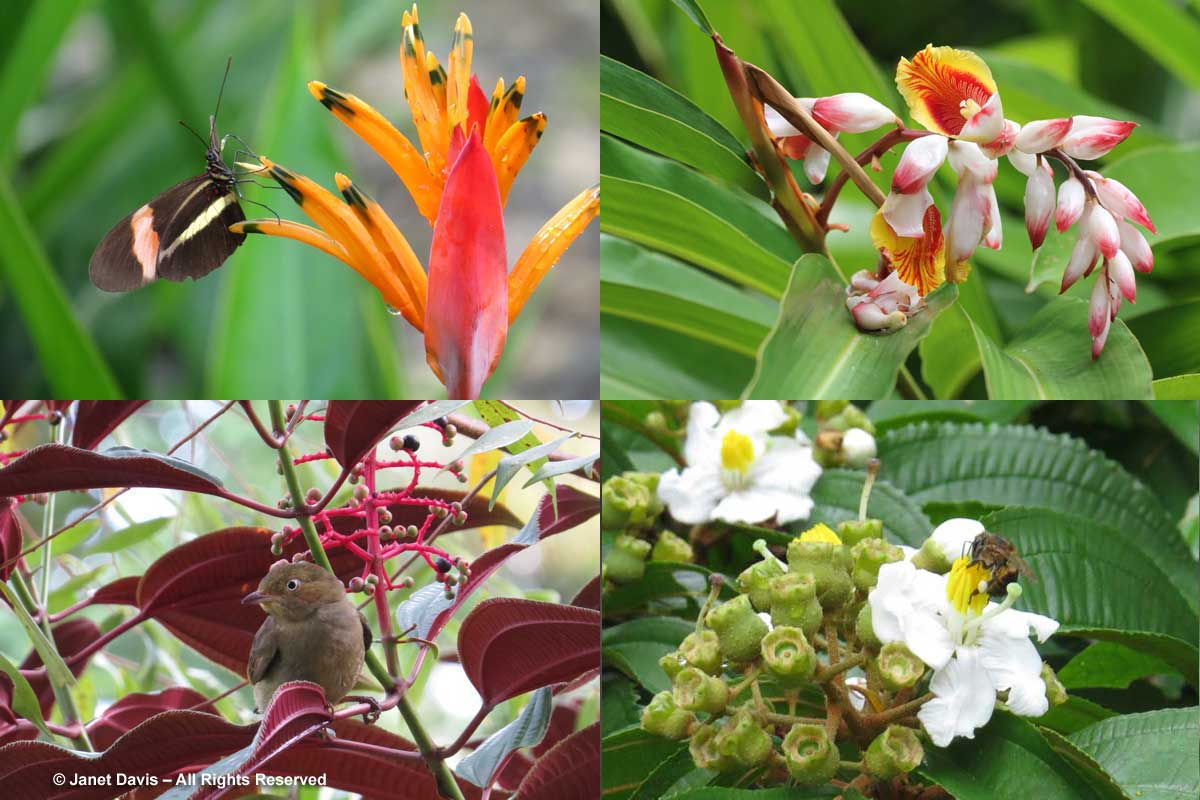 Flora-El Remanso