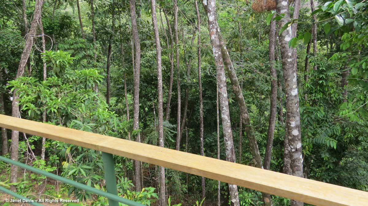 Rainforest birdge-El Remanso